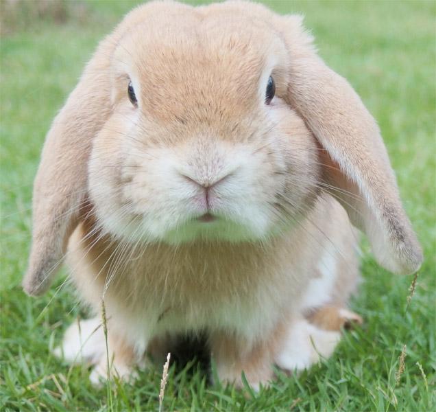 Elke-Arnhem-Konijn-konijnenvoeding