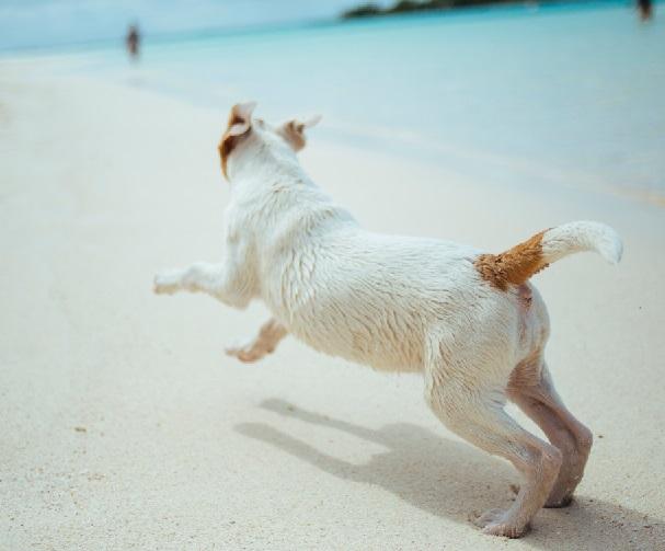 hond-mee-op-vakantie-elke-arnhem