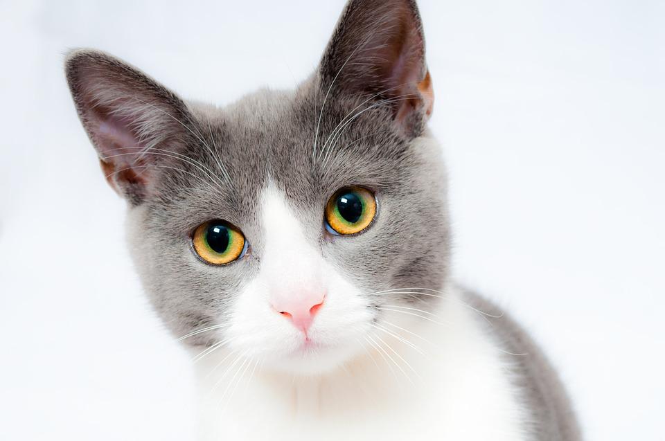 vaccinaties-kat-elke-dierenarts-arnhem